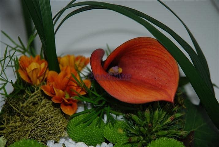 Arranjo floral vegetativo