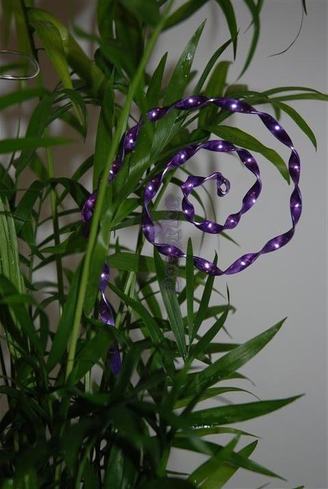 chamaedora elegans